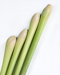 lemongrass_cedf1b96-2980-4164-9d87-31063f8d90a8_1024x1024
