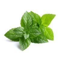 peppermint-leaf_ml