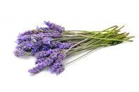 lavender_cde57fe4-3b87-4347-a738-2659d76f0558_1200x