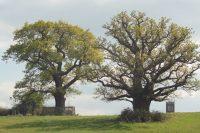 oakwood-co26